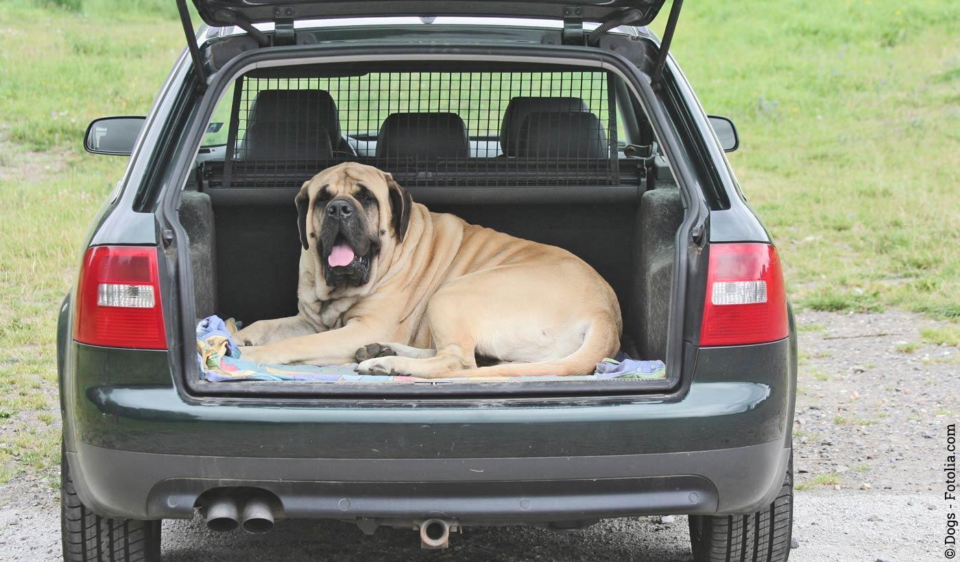 Das Auto Richtig Reinigen Tipps Und Tricks Für Hundebesitzer